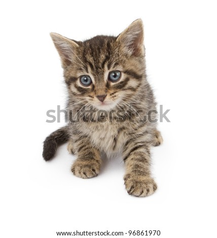 An adorable small six week old kitten laying down on a white background