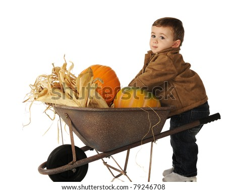 An adorable toddler reaching into a wheelbarrow full of pumpkins and Indian corn.  Isolated on white.