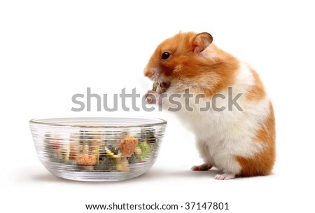 stock photo : An adult female