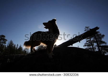 An adventurous dog silhouetted against a sunrise while standing on a rock in the mountains.
