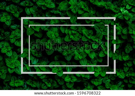 an advertisement, background abstract, background leaf, beautiful, bloom, blooming, bright, calm, card note, close up, closeup, color, colorful, concept, dark background, dark green, dark green backgr