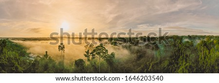 An aerial panorama view of tropical rainforest in morning misty, Stunning sunrise view of Borneo Rainforest