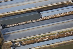 An aerial photograph taken from a helicopter of a large industrial turkey farm in Britain. Many birds in large sheds are being raised for meat production and food