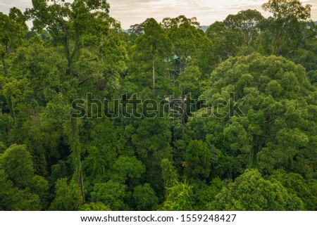 An aerial view of Borneo jungle, Stunning view of Tropical Rainforest in Rainforest Discovery Centre (RDC), Sandakan - Sabah, Malaysia. #1559248427