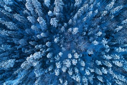 An aerial view on winter wonderland snowy boreal coniferous forest with frosty pine and spruce in Estonian nature, Northern Europe.