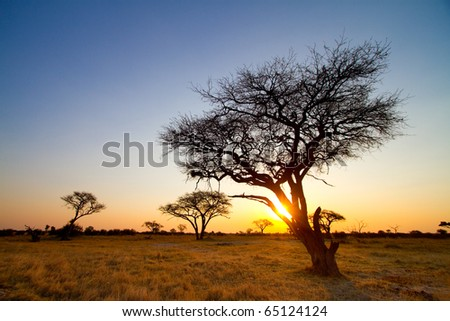 An African sunset in Hwange National Park