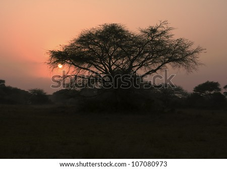 An African thorn tree (or acacia tree) is silhouetted in front of the glowing sun at sunrise on the African savanna in South Africa.
