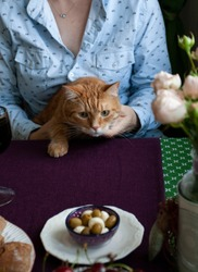 An after-lunch break: a woman holding a ginger cat at the kitchen table with various appetizers: a bowl with olives and mozzarella, a plate of fresh buns and a bowl of cherries on a purple napkin