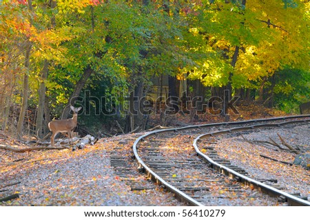 An alert deer stands by an old railroad track