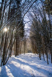 an alley through the forest in winter