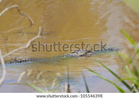 An alligator, with a dragonfly on its head, lurking for a meal in a pond.