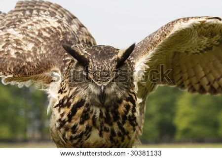 An almost flying Eagle owl - stock photo