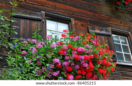 An alpine house is in flowers