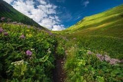 An amazing mountain valley full of fresh grass and blooming flowers and a sidewalk leading to the valley. High Tatras NP, Slovakia