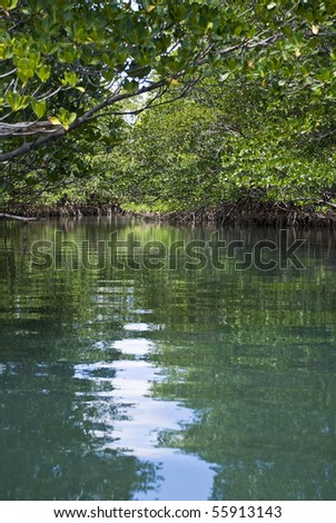 An amazingly beautiful and peaceful mangrove forest scene.