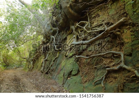 An ancient sunken path (Hell Lane) near village of Symondsbury in west Dorset