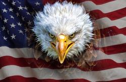 An angry north american bald eagle on american flag.