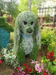 An animal shaped bush in the Gardens, The tree is trimmed to the shape of a dog .