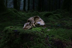 An animal skull illuminated by subtle diffused light on a mossy tree stump. The dark forest behind gives an unusual context like an offering to a god or an altar.