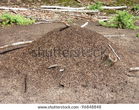 An ant hill is a pile of earth sand and pine needles in the forest