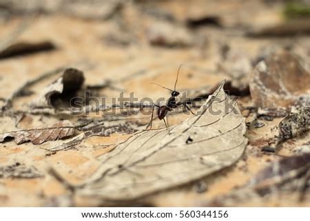An ant on a  leaf #560344156