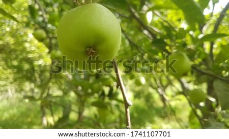 An apple aday keeps doctor away Stok fotoğraf ©