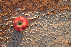 An apple on a dry and cracked desert soil. Food insecurity, water supply shortage, hunger, drought, climate change and desertification concept.