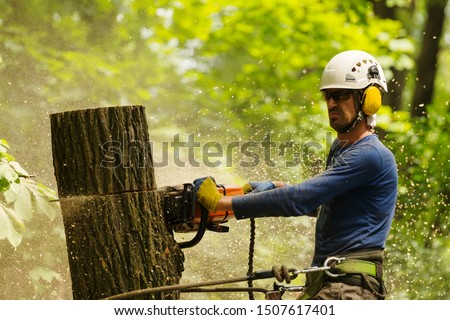 An arborist cutting a tree with a chainsaw Stock photo ©