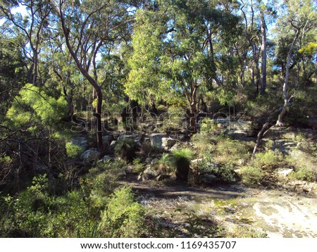 An area of natural bushland in the rural town of Crows Nest Queensland Australia.