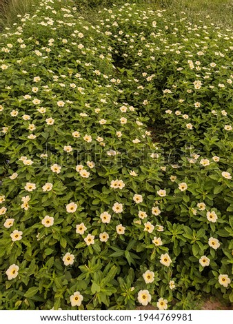 an area view of  blooming flowers. The perfect combination of yellow and green in its un-tapped form of nature. soothing to the eye and calming to the soul. Foto stock ©