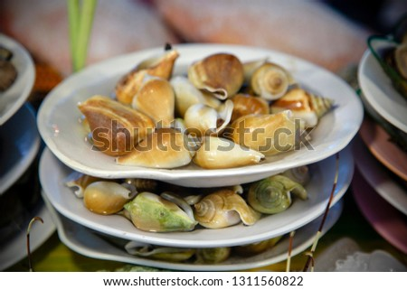 An arrangement of seafood shellfish known as the dog conch at a fish market in Phuket, Thailand. Dog Conch is a species of edible sea snail, a marine gastropod mollusk in the family Strombidae. #1311560822