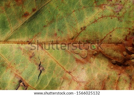 An artistically enhanced photograph of an old leaf. This photo was taken in Brisbane, Australia.