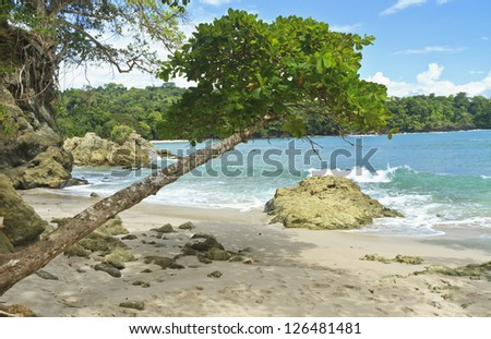 An askew shade tree on the south end of Playa Manuel Antonio in Manuel Antonio National Park, Costa Rica