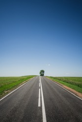 An asphalt road among meadows leading to a large tree on the horizon. Beautiful summer landscape with blue sky, greenery and a tree on the hill. Minimalism, transport links, travel concept.