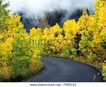 An asphalt road through a foggy aspen forest.