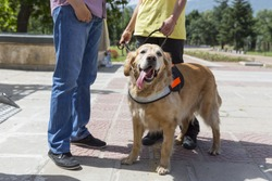 An assistance dog is trained to aid or assist an individual with a disability. Many are trained by an assistance dog organization, or by their handler, often with the help of a professional trainer.