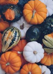 An assortment of mini pumpkins and gourds