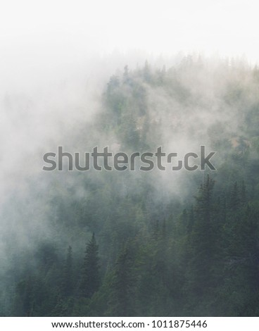 An atmospheric fog passed over the forest with low hanging clouds #1011875446