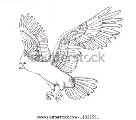Cockatoo Flying Drawing an Australian Cockatoo Flying