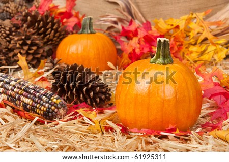 An Autumn holiday theme with pumpkins, corn, pine cones and autumn leaves on a hay base.