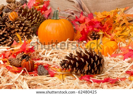 An Autumn holiday theme with pumpkins, corn, pine cones and autumn leaves on a hay base with focus on the pine cone.