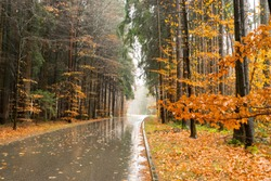 An autumn landscape with a wet street and deciduous trees in Bavaria.