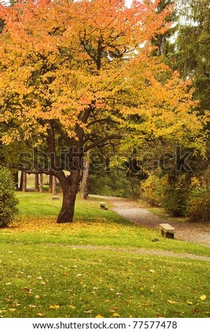 an autumn park