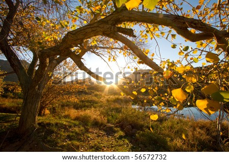 An autumn tree at sunset