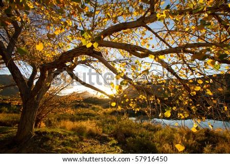 An autumn tree at sunset