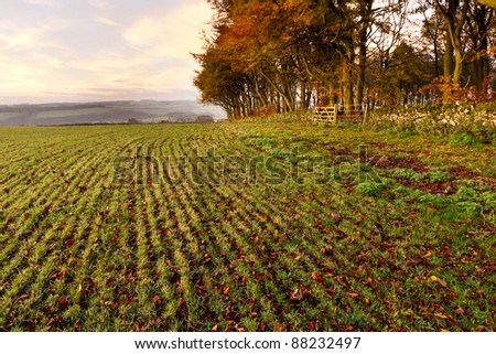 An autumnal scene of a crop field in the Peak District.