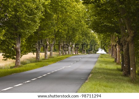 An avenue of trees in the Loire Valley, France.