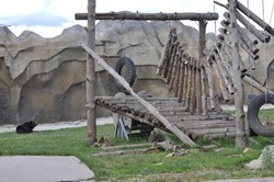 An aviary for a bear in the zoo. The bear is tired and resting. Zoo in Izhevsk.