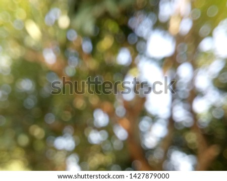 An blurred view of the garden is deceased the city in the morning. With the glare of the sun entering the foliage foliage adds to the exotic scenery.  #1427879000