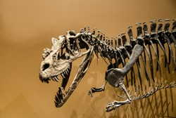 An dinosaur skeleton on brown background